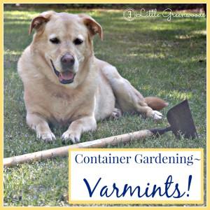 Garden Varmints! ~ DIY Container Gardening by 3 Little Greenwoods