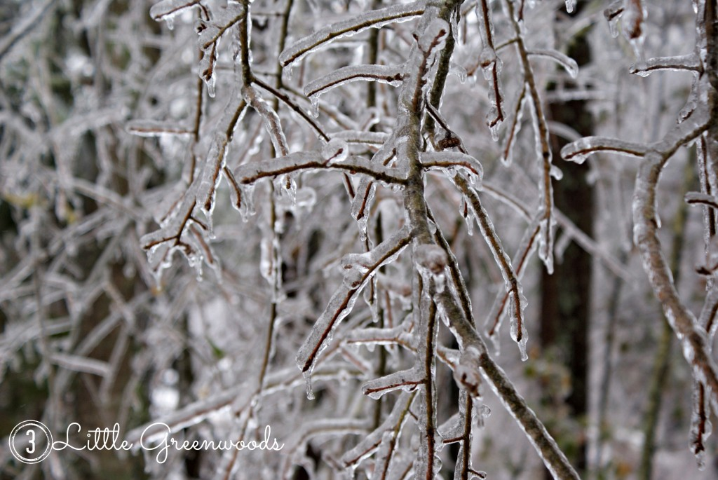 Ice Storm 2014 by 3 Little Greenwoods