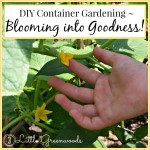 Blooming Into Goodness ~ DIY Container Gardening