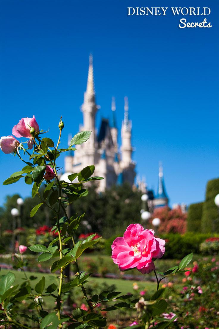 Disney World Secrets with Super Mommy Club
