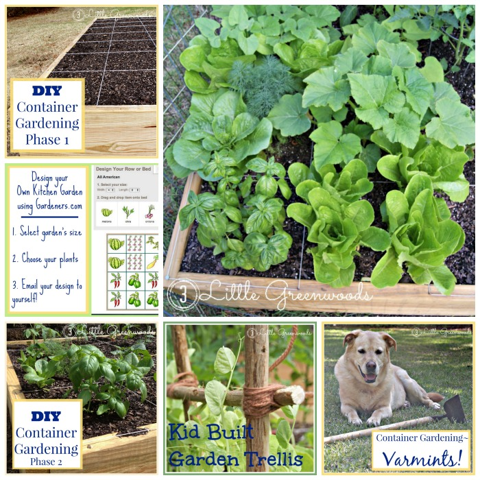 DIY Container Garden (planning, planting, growing) https://www.3littlegreenwoods.com