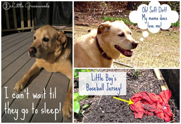 DIY Container Gardening (bad dog) 3 Little Greenwoods