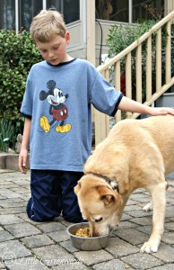 A Mama and Son Day {Dog Included} Spending time with your tween is easy thanks to PetSmart and Purina® Pro Plan®. #ProPlanPet #CollectiveBias #ad